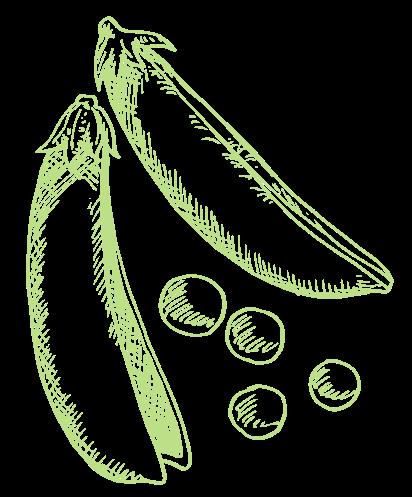 raw legumes