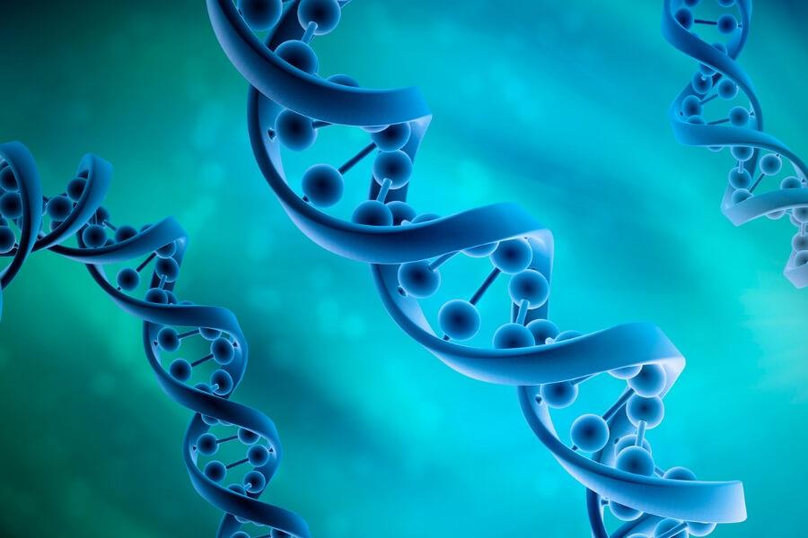Human genomes
