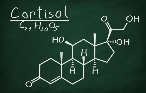 Cortisol chemical makeup