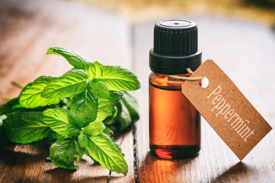 Peppermint essential oils for headaches