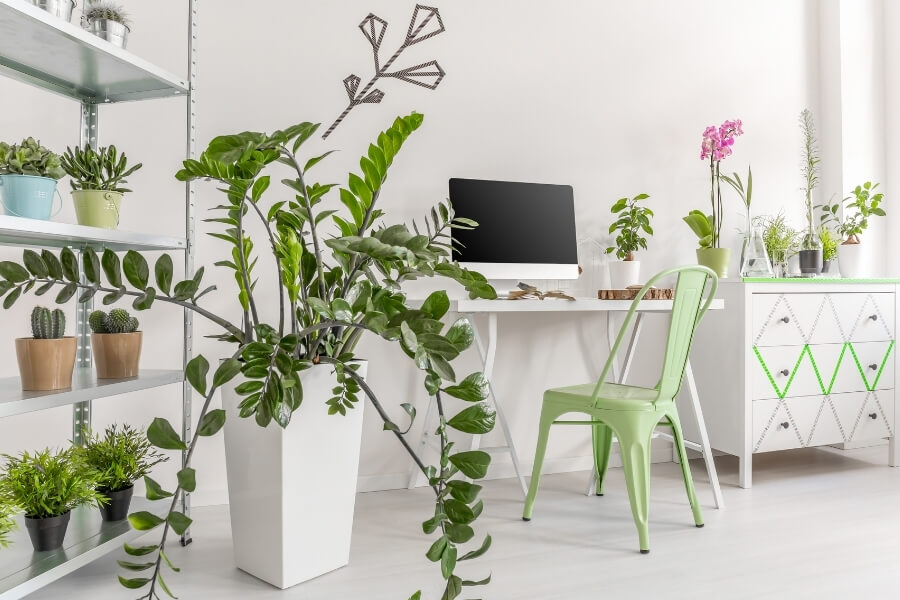 Different houseplants You Should Have