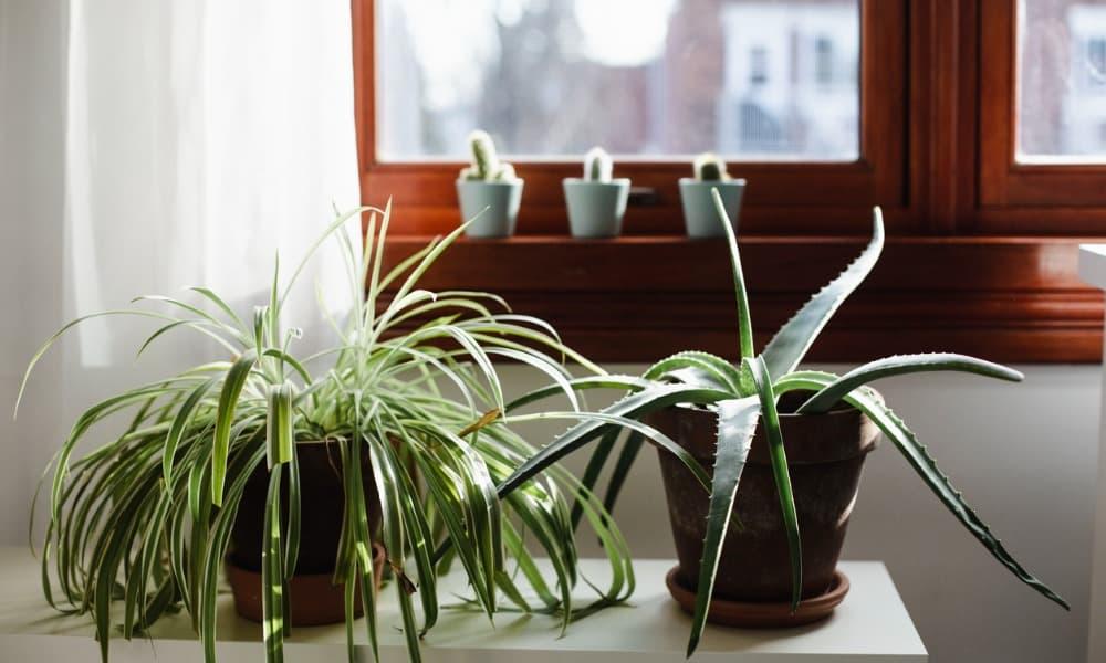 health-benefits-of-houseplants